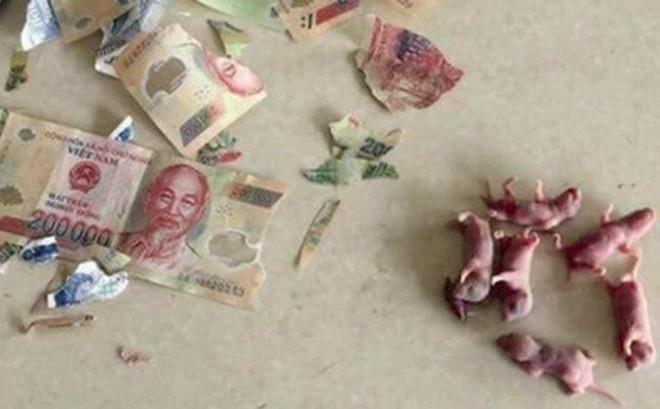 Cô Nàng Số Nhọ Bị Chuột Gặm Nát Hết Tiền Bỏ Lợn, Đã Thế Còn Khuyến ...