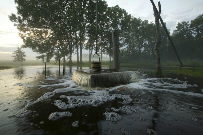 Bí ẩn hiện tượng nước chảy ra từ thân cây cổ thụ dù trời đang nắng chang chang - Ảnh 4.