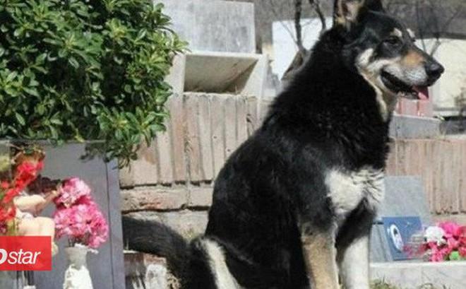 Sau 11 năm âm dương cách biệt, cuối cùng chú chó 'trung thành nhất thế giới' cũng được đến bên chủ