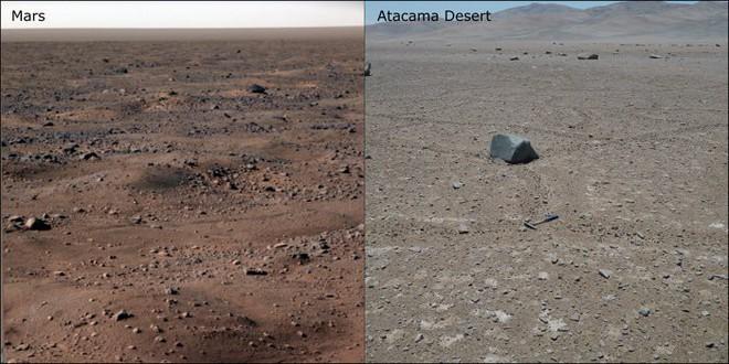 Tìm thấy sinh vật có khả năng chết đi sống lại tại hoang mạc khô hạn nhất hành tinh - Ảnh 1.