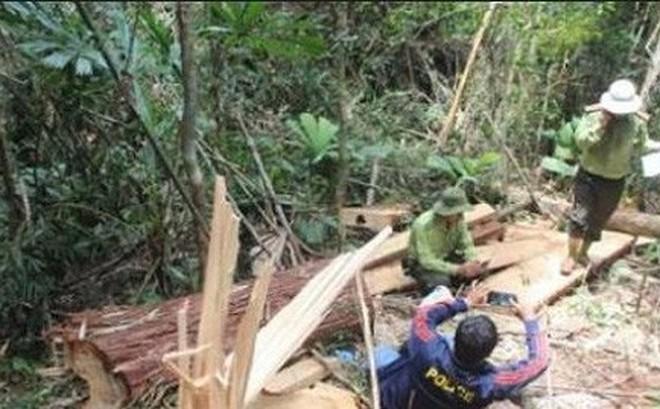 Xem xét khởi tố vụ án phá rừng quy mô lớn ở Quảng Bình