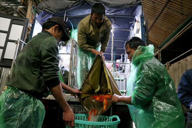 Chợ cá lớn nhất Hà Nội rực vàng trước ngày cúng ông Công ông Táo - Ảnh 1.