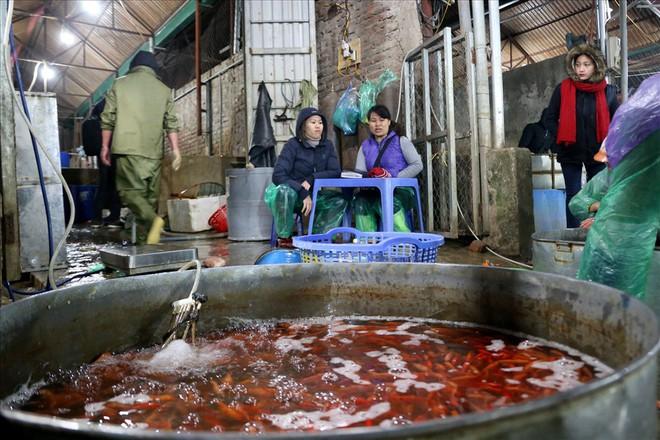 Chợ cá lớn nhất Hà Nội rực vàng trước ngày cúng ông Công ông Táo - Ảnh 11.
