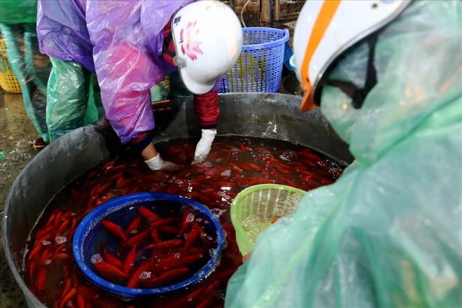 Chợ cá lớn nhất Hà Nội rực vàng trước ngày cúng ông Công ông Táo - Ảnh 5.