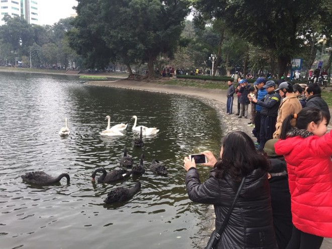 PGS Hà Đình Đức: Họ bảo tôi không làm gì cho Hồ Gươm, khiến rùa chết còn bảo thủ - Ảnh 2.
