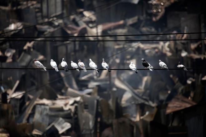 24h qua ảnh: Cảnh sát đứng giữa biển lửa bom xăng của người biểu tình - Ảnh 5.