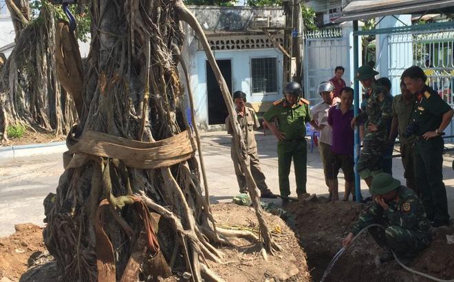Đào gốc cây bồ đề, tá hỏa phát hiện 40 quả pháo