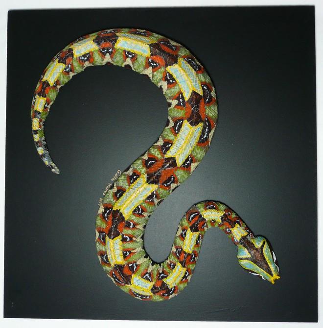 Hoa văn sặc sỡ đẹp mắt của rắn viper. Ảnh: Galileo Ramos