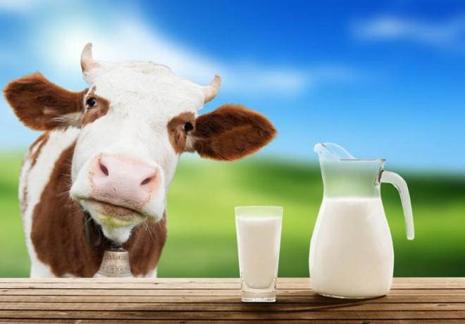 Chuyên gia Vũ Thế Thành: Sữa mẹ tốt nhất cho em bé, sữa bò tốt nhất cho... con bê! - Ảnh 1.