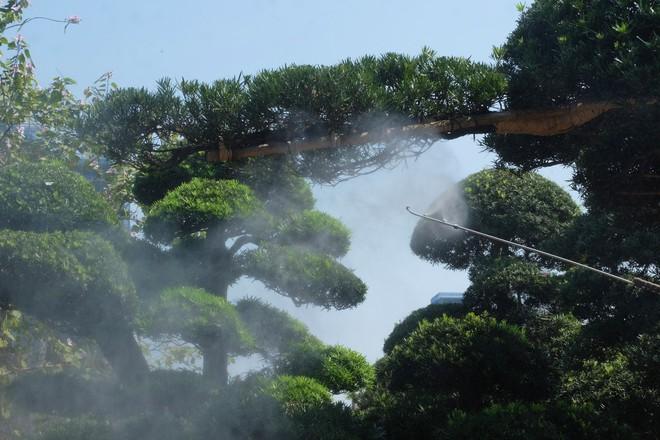 Vườn cây Nhật nghìn tỷ ở Hà Nội: 17 tỷ đồng cây tùng la hán 600 tuổi - Ảnh 6.