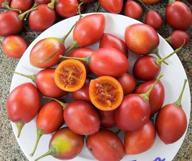 Cà chua lạ đắt gấp 50 lần cà chua thông thường vẫn đắt khách - Ảnh 2.