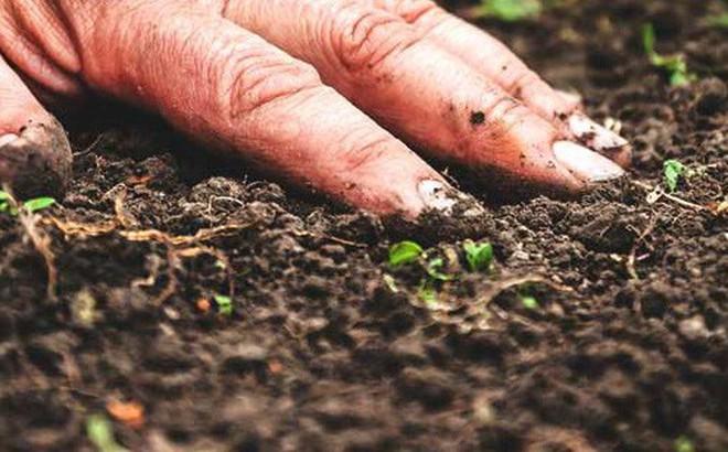 Thế hệ kháng sinh mới có nguồn gốc từ lòng đất: Cứu cánh mới trong tình trạng kháng thuốc