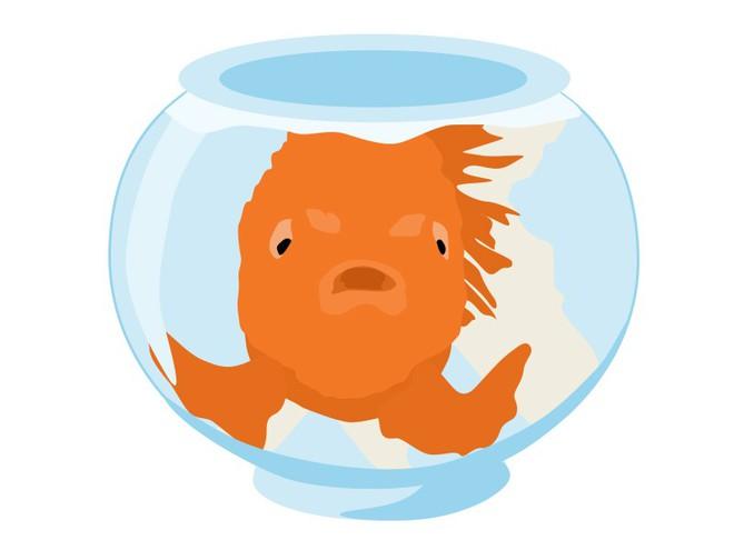 Sự thật đằng sau bí ẩn não cá vàng chỉ nhớ được 3 giây - Ảnh 3.