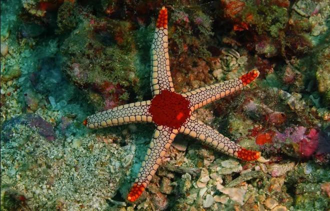 Sở hữu nghìn mắt nhưng lại không có não - đây thực sự là con quái vật kinh khủng nhất đại dương - Ảnh 7.