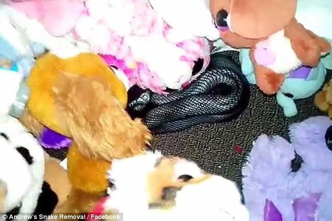 Kinh hoàng rắn cực độc ẩn nấp trong đống đồ chơi - Ảnh 1.