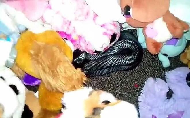 Kinh hoàng rắn cực độc ẩn nấp trong đống đồ chơi