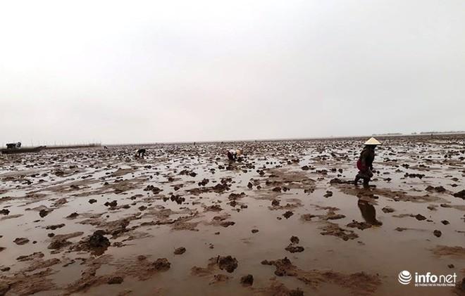 Loại cá kỳ dị nhất hành tinh được nhiều ngư dân săn bắt ở biển Thanh Hóa - Ảnh 1.