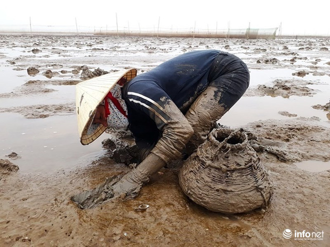 Loại cá kỳ dị nhất hành tinh được nhiều ngư dân săn bắt ở biển Thanh Hóa - Ảnh 3.