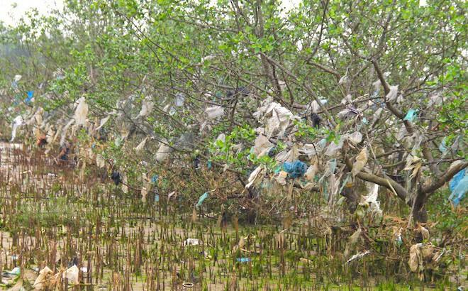 """Rừng """"cây rác"""" lủng lẳng ven sông Lam khiến nhiều người rùng mình"""