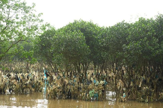 Về Đa Lộc xem núi rác treo lơ lửng trên rừng phòng hộ  - Ảnh 13.