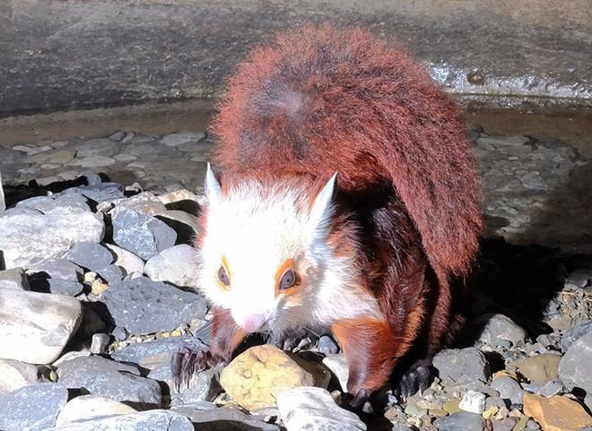 Thám hiểm hang động dài nhất châu Á, các nhà khoa học phát hiện sinh vật kỳ lạ - Ảnh 2.