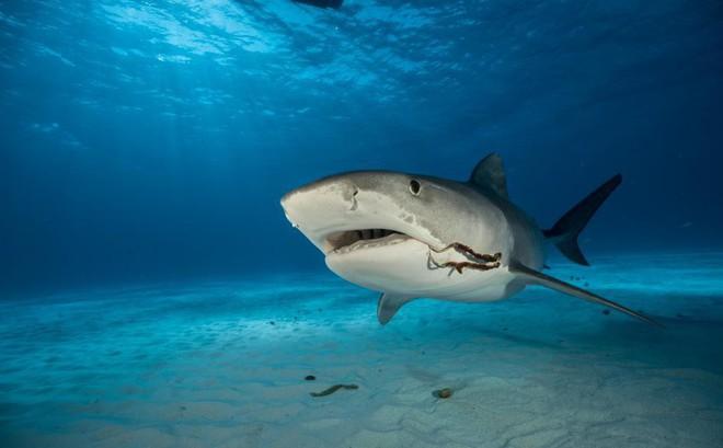 """Nỗi ám ảnh về con cá """"tàn ác"""" và kẻ thù lớn nhất của loài cá ..."""