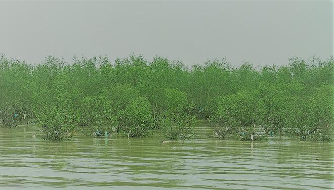 Rừng phòng hộ treo rác tại biển Đa Lộc, do thủy triều hay lý do quanh co trốn trách nhiệm? - Ảnh 12.