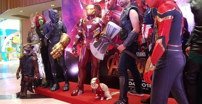 Khách mời đặc biệt gây sốt hơn cả sao Việt tại họp báo phim bom tấn Avengers - Ảnh 3.
