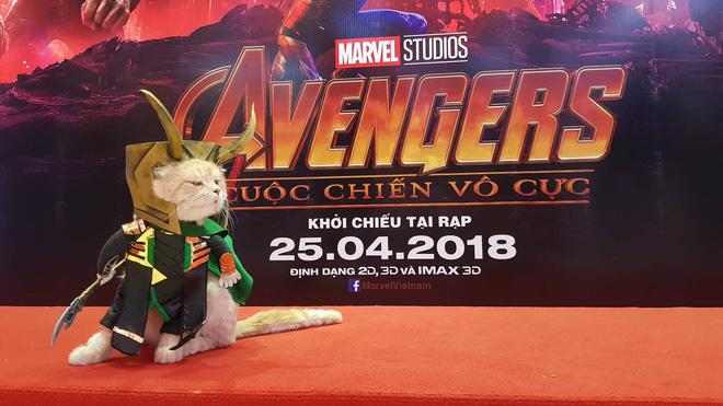 Khách mời đặc biệt gây sốt hơn cả sao Việt tại họp báo phim bom tấn Avengers - Ảnh 6.