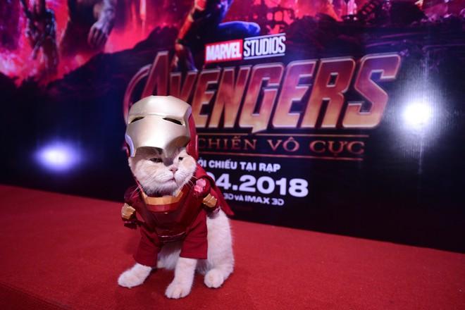 Khách mời đặc biệt gây sốt hơn cả sao Việt tại họp báo phim bom tấn Avengers - Ảnh 9.