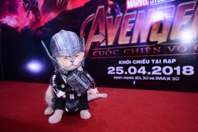 Khách mời đặc biệt gây sốt hơn cả sao Việt tại họp báo phim bom tấn Avengers - Ảnh 10.