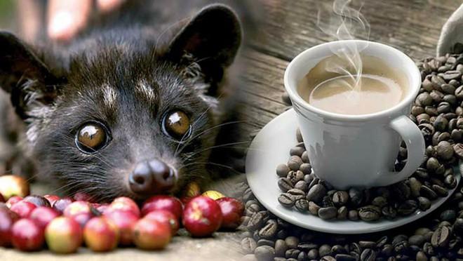 Cafe chồn ngon và đắt nhất thế giới nhưng nghe xong câu chuyện tàn nhẫn này, bạn có còn muốn uống nữa không? - Ảnh 2.
