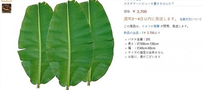 Sự thật bất ngờ khúc chuối dành cho lợn ăn tại Việt Nam lại có giá 300.000 đồng ở Nhật Bản - Ảnh 3.