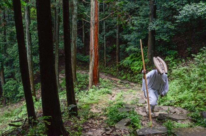 Sai 2 đệ tử vào rừng tìm một chiếc lá, vị đại sư chọn được người kế thừa một cách dễ dàng - Ảnh 2.