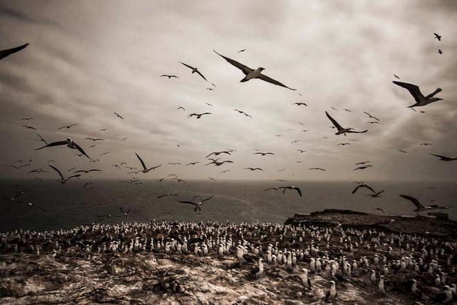 Hành trình khắc nghiệt tại hòn đảo làm giàu bằng phân chim, tạo cơn sốt khắp châu Âu - Ảnh 7.