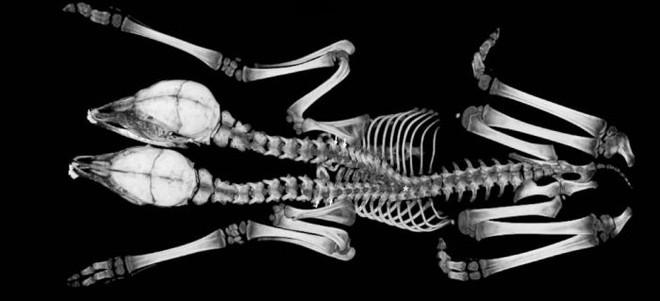 Khoa học mất 2 năm xét nghiệm xác hươu hai đầu, để rồi nhận ra một câu chuyện buồn và cảm động sau đó - Ảnh 2.