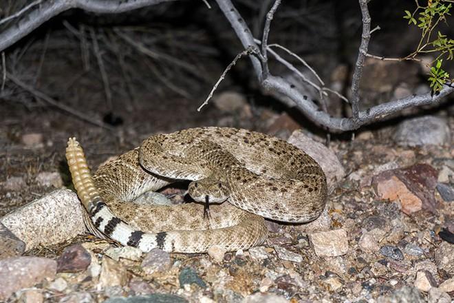 Xâm nhập lãnh địa bầy rắn độc: Không ngờ đụng độ tử thần ngay trong đêm - Ảnh 4.