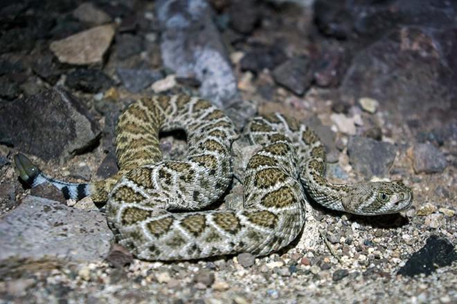 Xâm nhập lãnh địa bầy rắn độc: Không ngờ đụng độ tử thần ngay trong đêm - Ảnh 8.