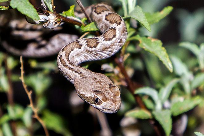 Xâm nhập lãnh địa bầy rắn độc: Không ngờ đụng độ tử thần ngay trong đêm - Ảnh 10.