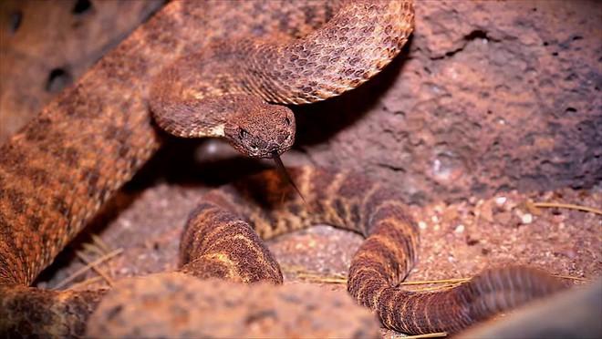 Xâm nhập lãnh địa bầy rắn độc: Không ngờ đụng độ tử thần ngay trong đêm - Ảnh 12.