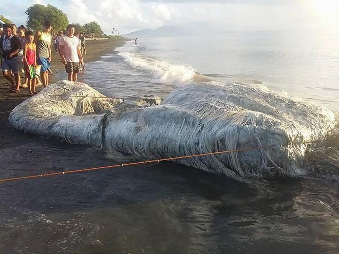 Sinh vật lông lá như đến từ ngoài hành tinh bất ngờ dạt vào bở biển Philippines - Ảnh 3.