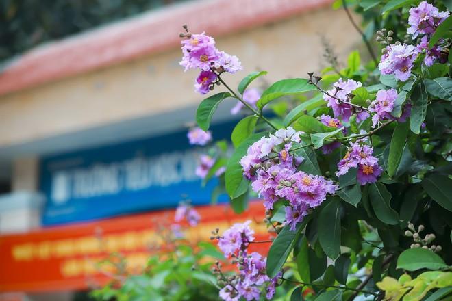 Ngắm hoa bằng lăng nhuộm tím trời Hà Nội - Ảnh 6.