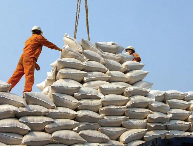 20 chuyên gia từ 5 châu lục bàn phương án tăng giá trị cho gạo Việt - Ảnh 1.