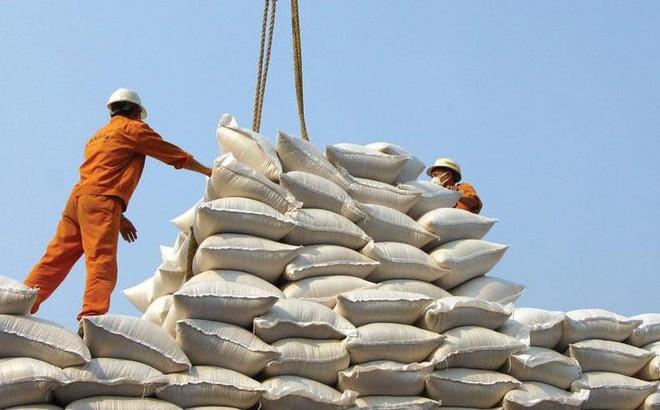 20 chuyên gia từ 5 châu lục bàn phương án tăng giá trị cho gạo Việt