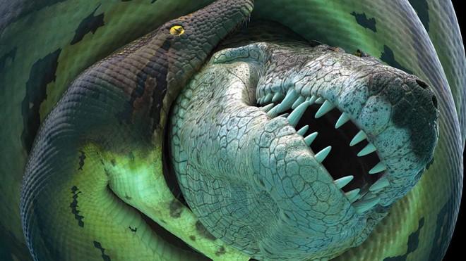 Titanoboa - Mãng xà cổ đại: Dài gấp đôi Anaconda, chuyên làm thịt cá sấu tiền sử - Ảnh 1.