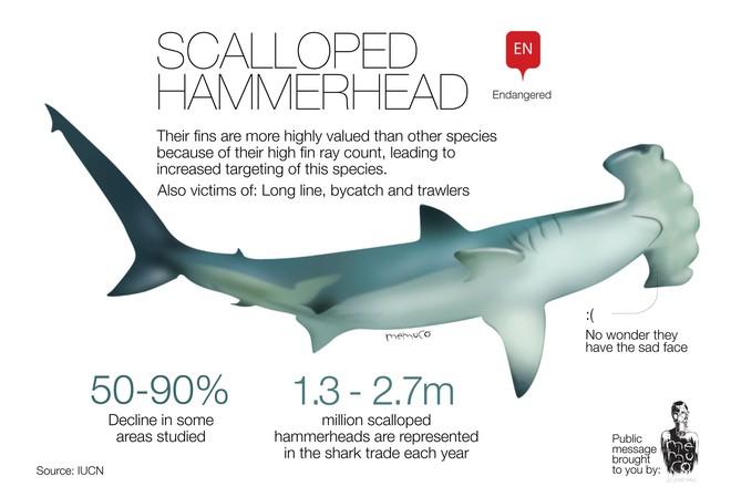 Phát hiện cá mập trên miệng núi lửa nhưng không ai lý giải nổi vì sao chúng lên được đó - Ảnh 2.