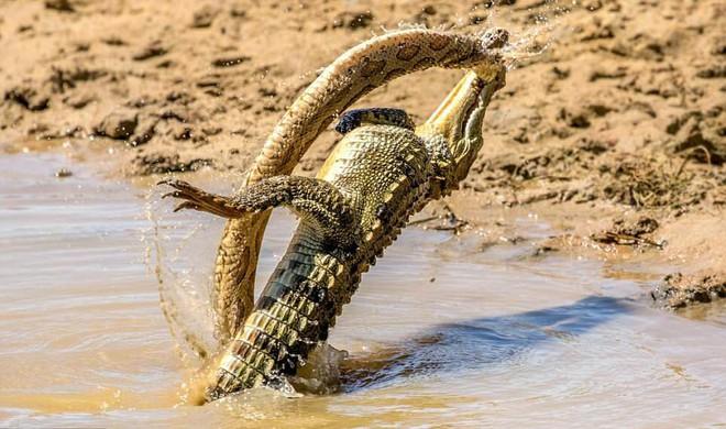7 ngày qua ảnh: Cá sấu đánh bại rắn khổng lồ trong cuộc thủy chiến - Ảnh 2.