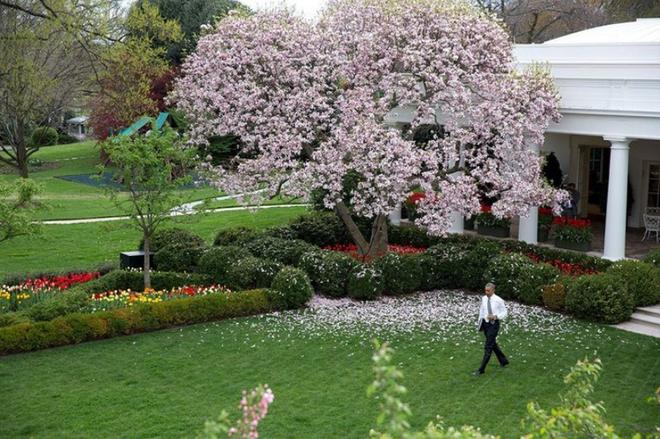 Những hình ảnh bên trong khu vườn bí mật của Nhà Trắng - ảnh 11