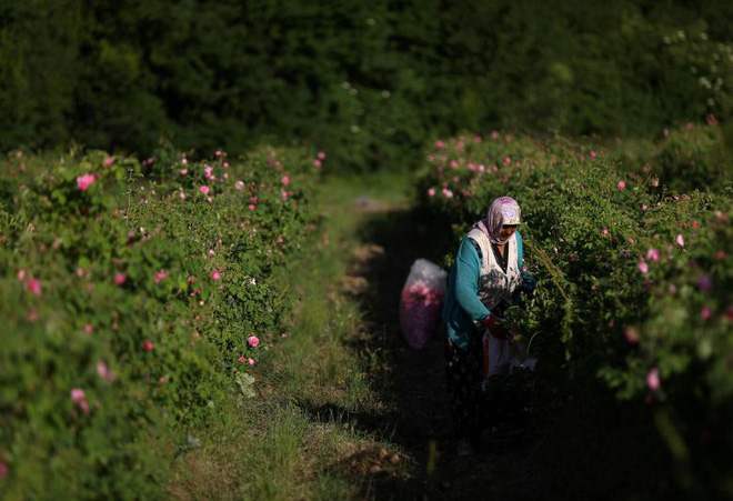 24h qua ảnh: Cảnh nông dân Phú Quốc phơi hồ tiêu lên báo Anh - Ảnh 8.