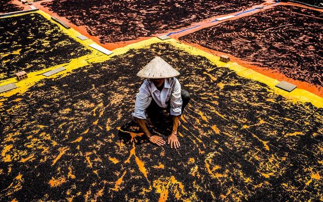 24h qua ảnh: Cảnh nông dân Phú Quốc phơi hồ tiêu lên báo Anh - Ảnh 4.